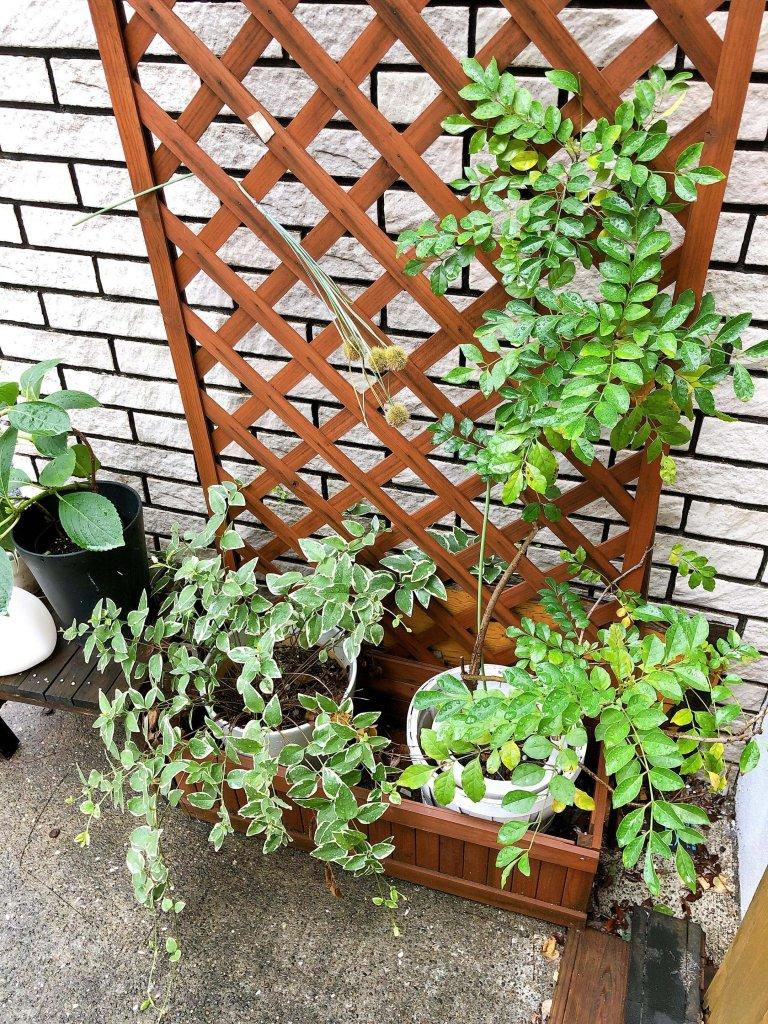 五反田 ベイカンシーオフィス植物たち